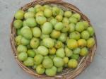 Seasonal Mango