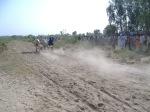 Ox Race2010 (23)