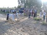 Ox Race2010 (36)
