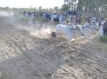 Ox Race2010 (37)