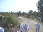 Ox Race 2011(50)