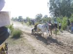 Ox Race 2011(68)